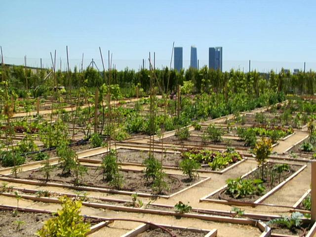 Comenzamos a preparar el terreno para el huerto urbano for Asociacion cultivos huerto urbano